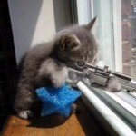 Domain Sniping Cat